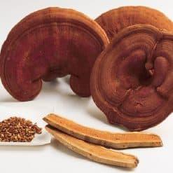 nấm linh chi nguyên tai