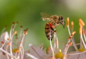 Mật ong ruồi rừng